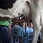milking cow demo
