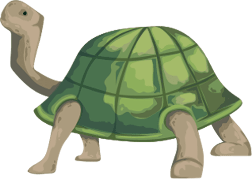 turtle summer camp